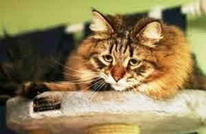 Глисты у кошки. 10 лекарств от гельминтов