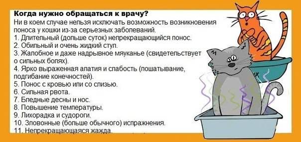Почему у кошек возникает рвота желчью, и как с ней справиться?