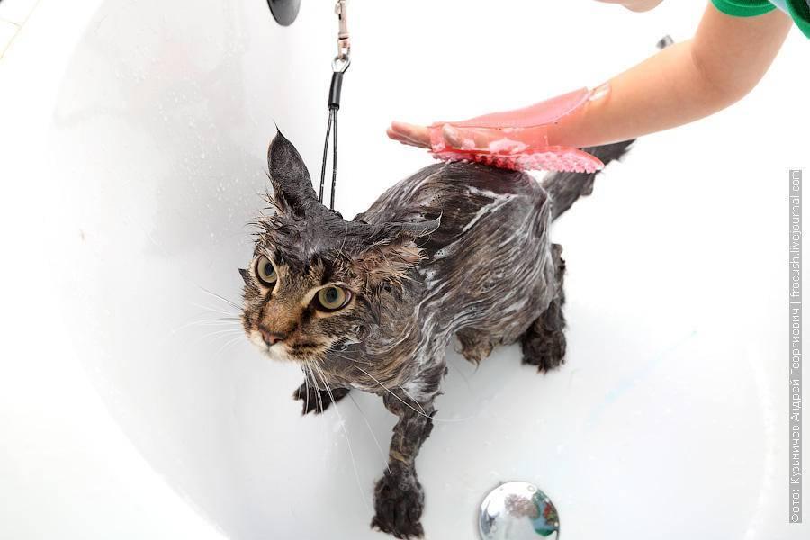 Почему кошки регулярно и часто умываются?