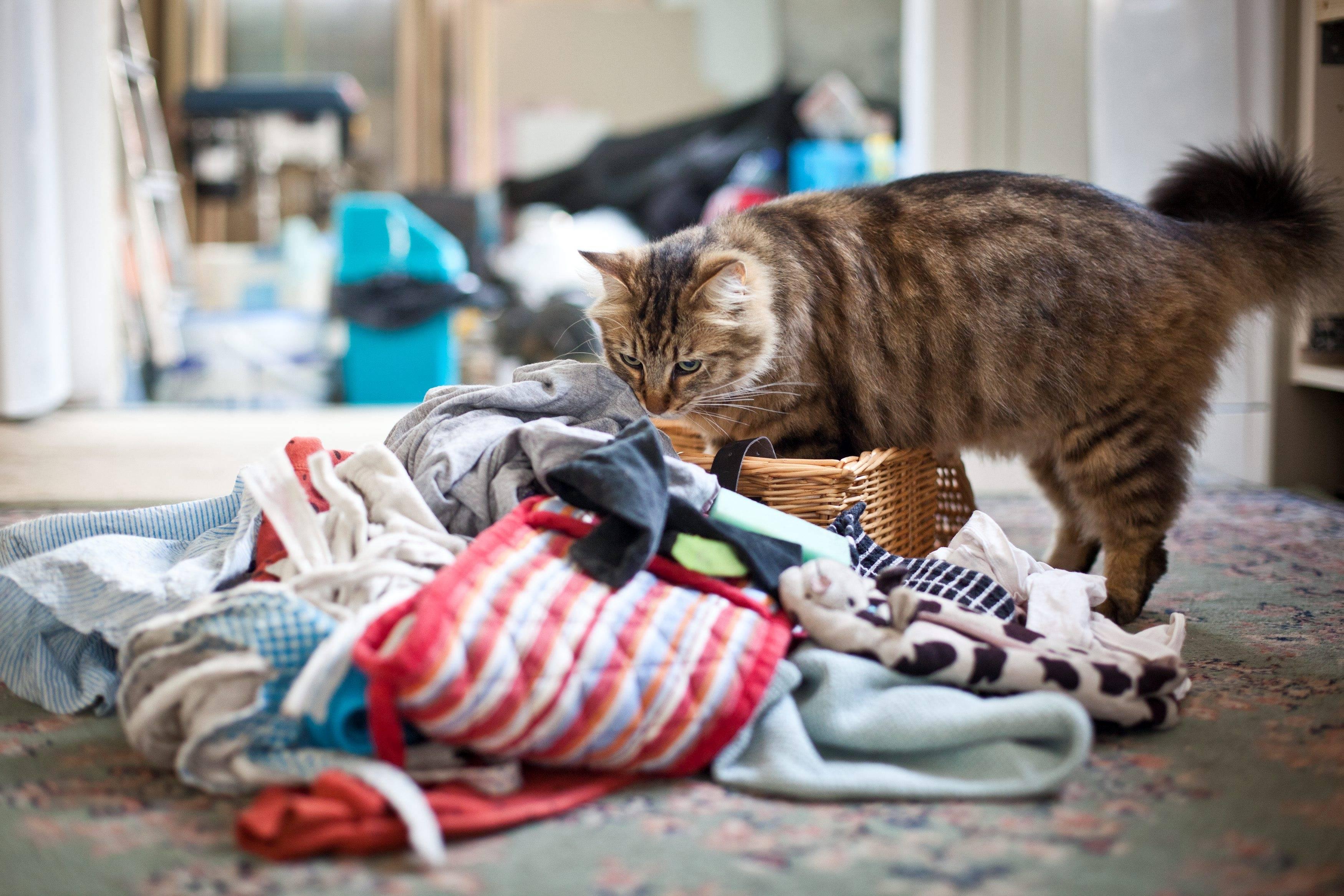 Как приучить кота к новому месту