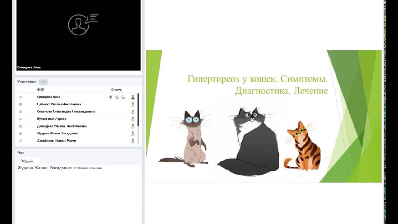 Гипертиреоидизм у кошек.