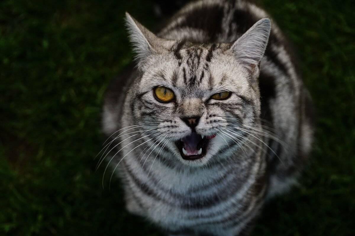 Кот смотрит в глаза: что бы это значило?