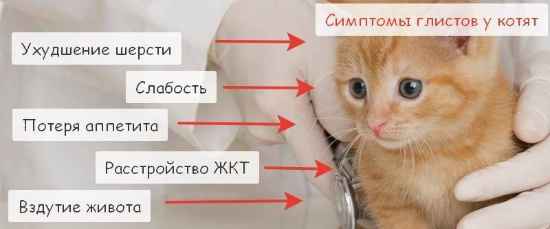 Ленточные глисты у кошек: пути заражения, методы лечения и профилактики