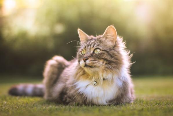 Что необходимо делать, если кошке жарко?