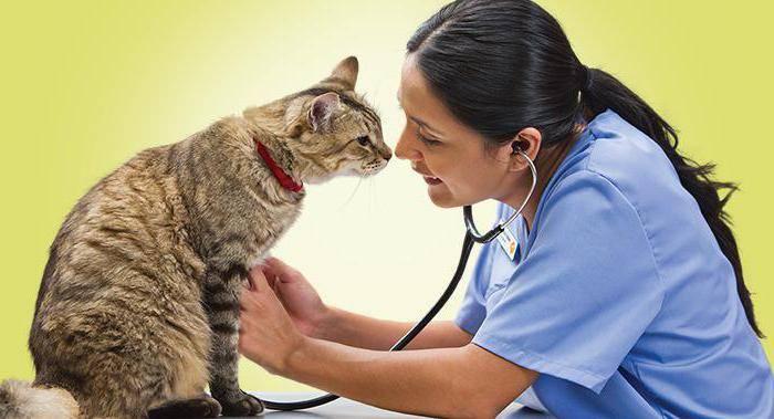 Болезни кошек: симптомы и лечение в домашних условиях и ветклинике