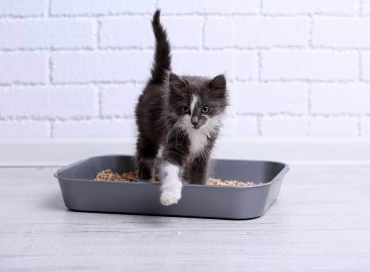 Как пользоваться наполнителем для кошачьего туалета?