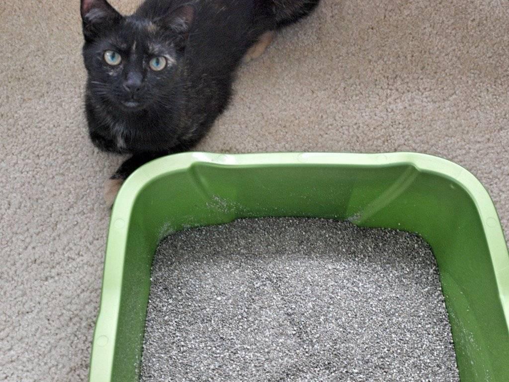 Как правильно отучить кота гадить в неположенном месте, полезные советы