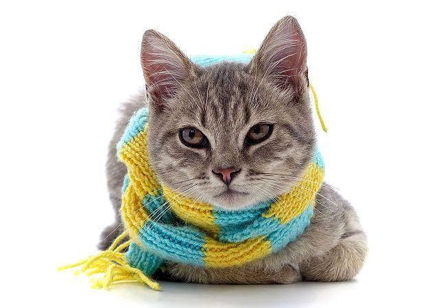 Могут ли кошки подхватить простуду или заболеть гриппом