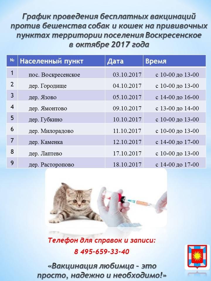 Какие прививки нужны котенку – когда делать первые прививки?