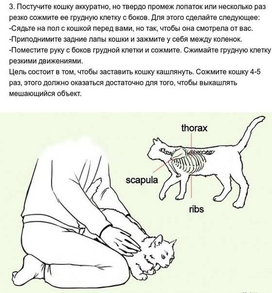 У кошки болит живот и она не дает его трогать – что делать в домашних условиях?