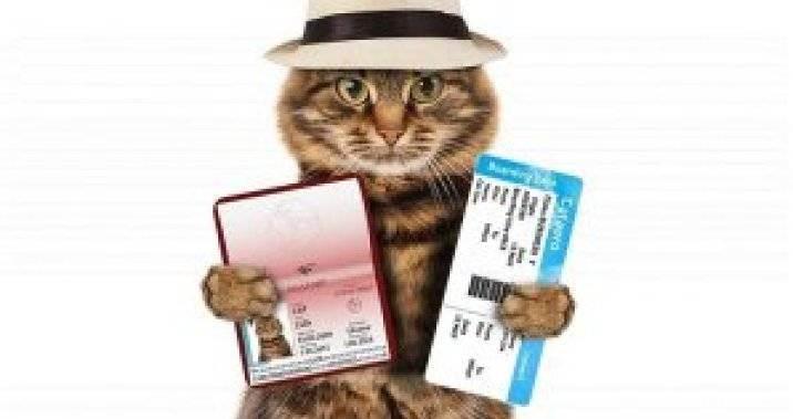 Можно ли и как выехать за границу с домашним животным?