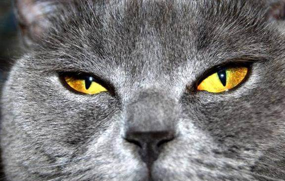Какие цвета видят кошки — какие различают
