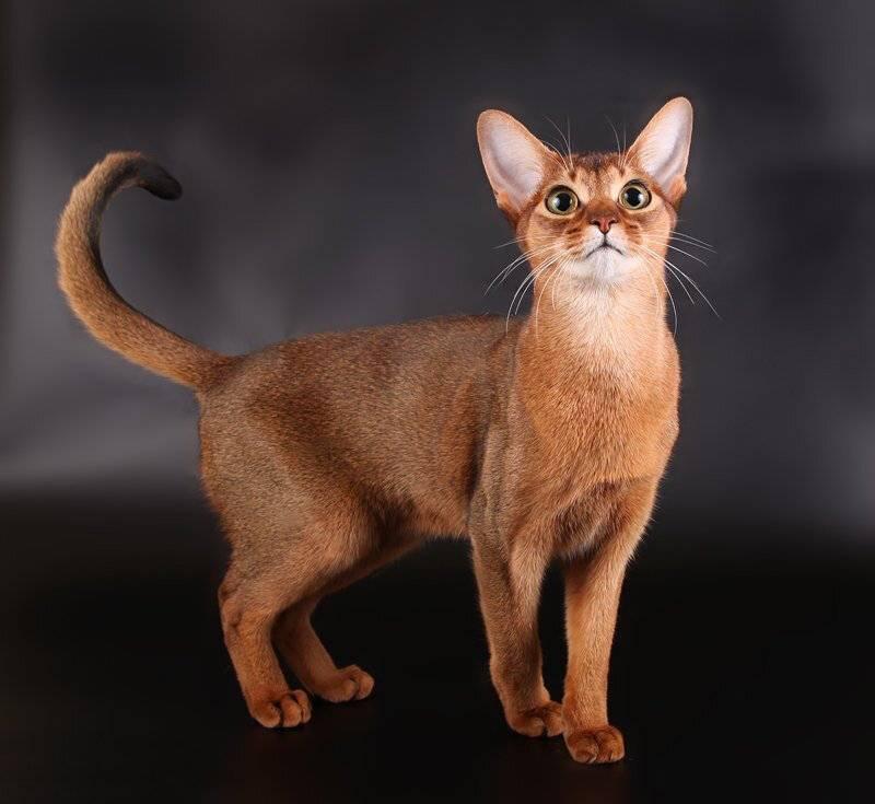 Какие кошки самые ласковые и умные?