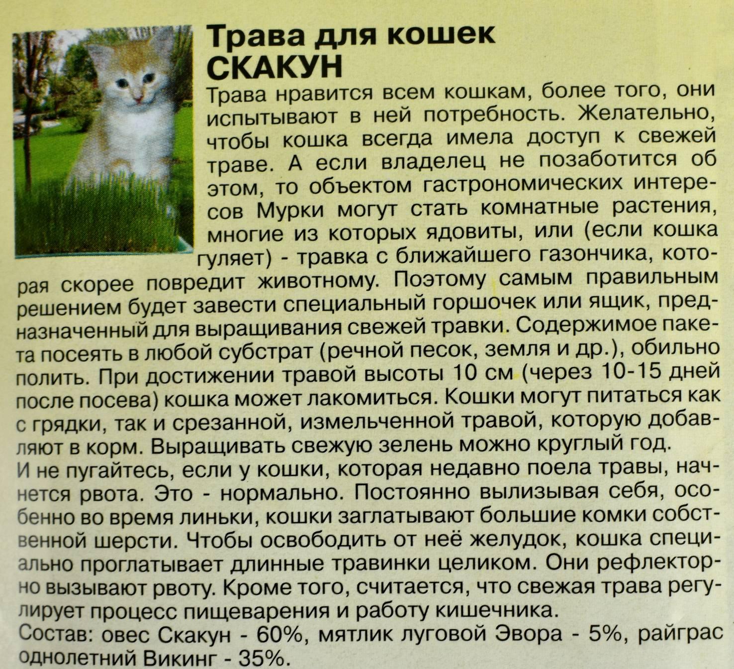 Какую траву едят кошки? ответы эксперта