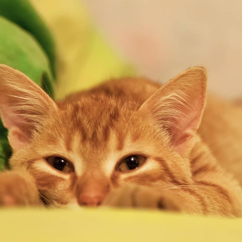 Что приносит в дом рыжий кот, к чему прибивается: приметы, поверья и суеверия