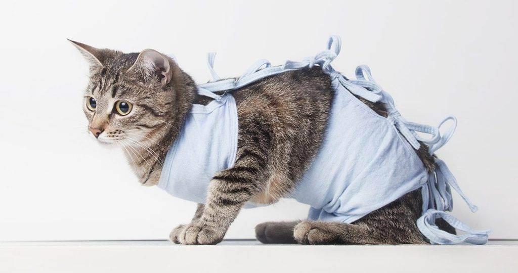 Как самостоятельно сшить попону для кошки после операции