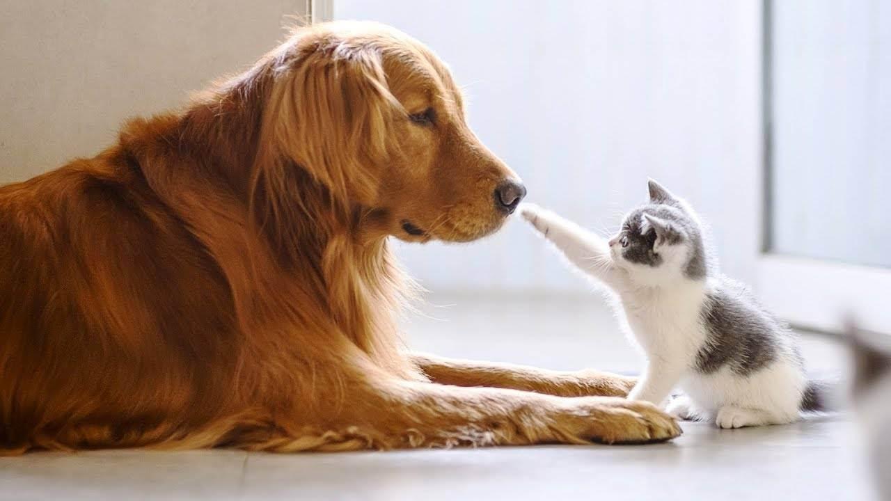 Как подружить кошку с собакой: советы зоопсихологов