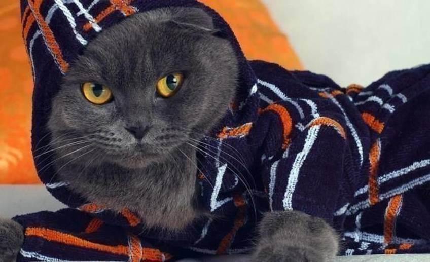 13 советов по уборке квартиры, в которой живет кошка