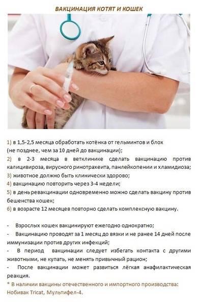 Прививки кошкам. правильная вакцинация котят | ветпрактика