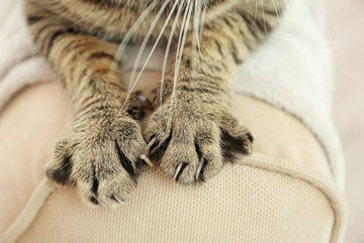 У кошки холодные лапы