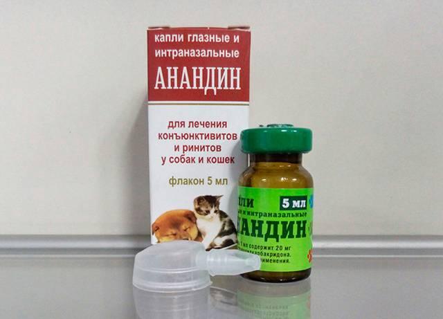 Капли в нос для кошек: виды, показания к применению, как закапать, инструкция