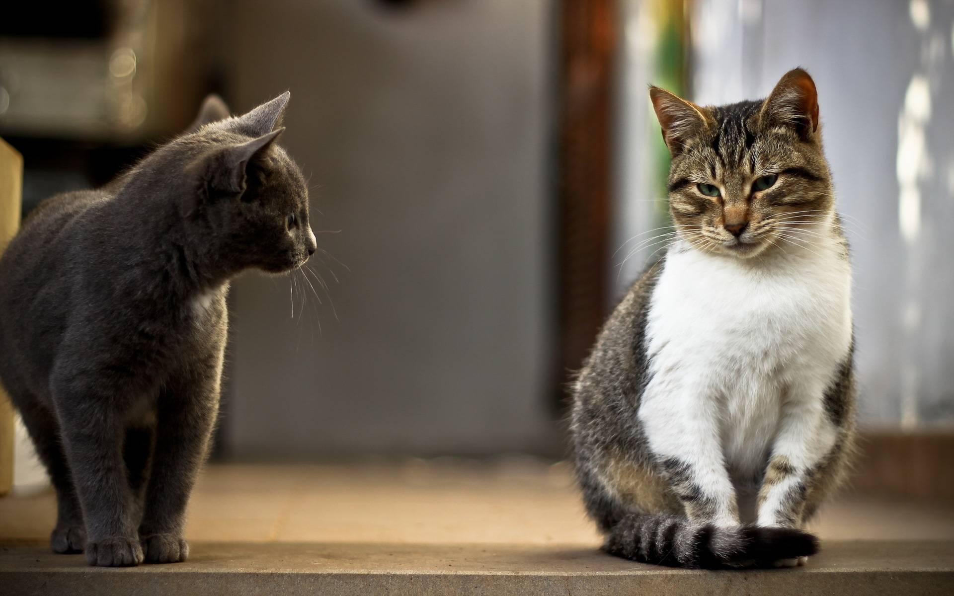Как понять, что болит у кошки, советы кошатникам