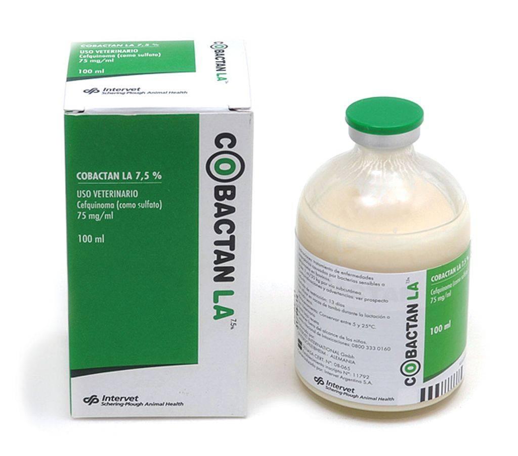 Антибактериальный препарат тилозин для лечения кошек - советы