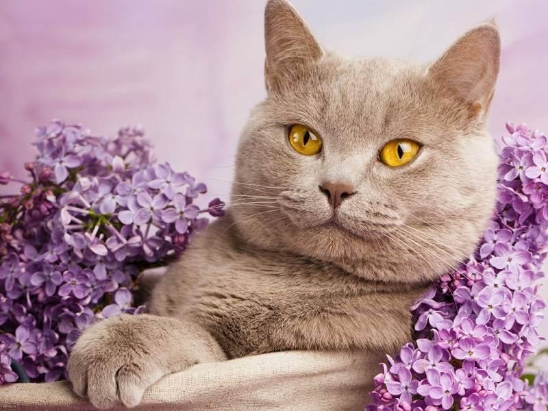 Список лучших имен для кошек и котов : самые популярные, красивые, оригинальные и смешные клички подходящие для черных, рыжих, белых, трехцветных и полосатых котов и кошек
