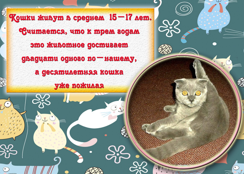 Интересные факты о кошках, фото и видео  - «как и почему»