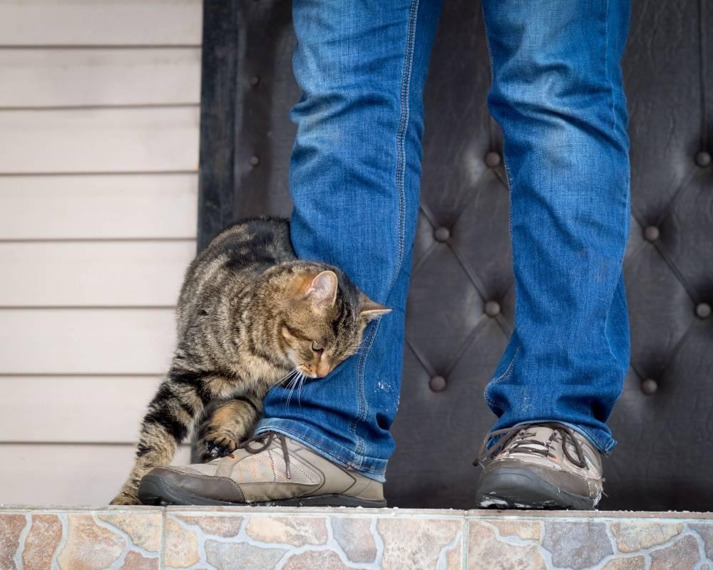 Кошка грызет обувь