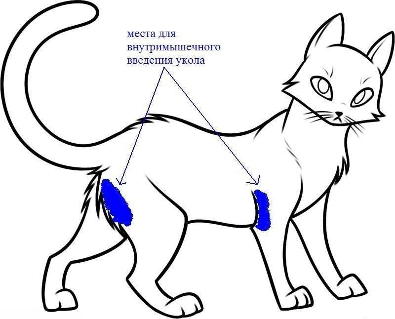 Как делать укол коту или кошке в холку   видео, как правильно ставить