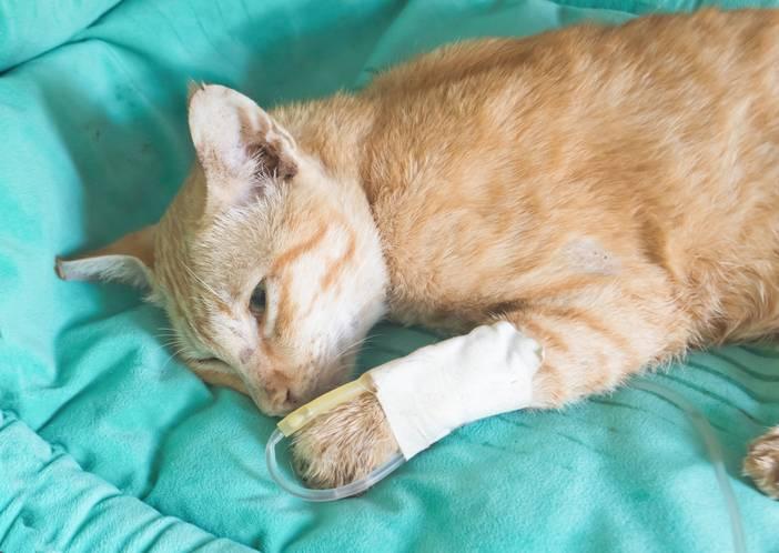 Все болезни кошек