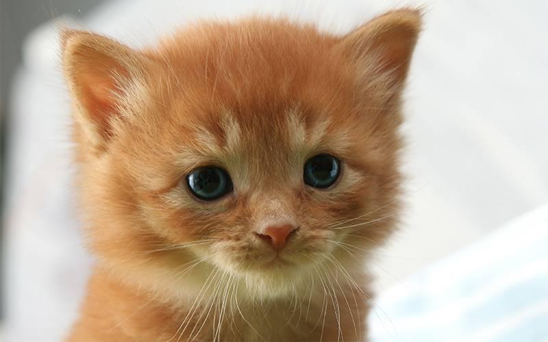 Популярные имена для кошек - popular cat names - qwe.wiki