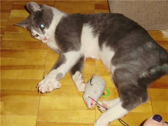 Заживет ли перелом без гипса у кота