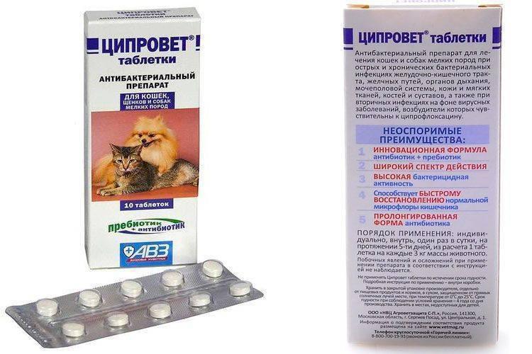 «цистон» для кошек: дозировка при цистите и мочекаменной болезни, инструкция по применению в ветеринарии, как давать