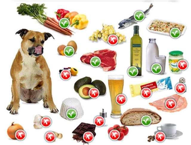 Чем нельзя кормить котят: подробный список продуктов и кормов
