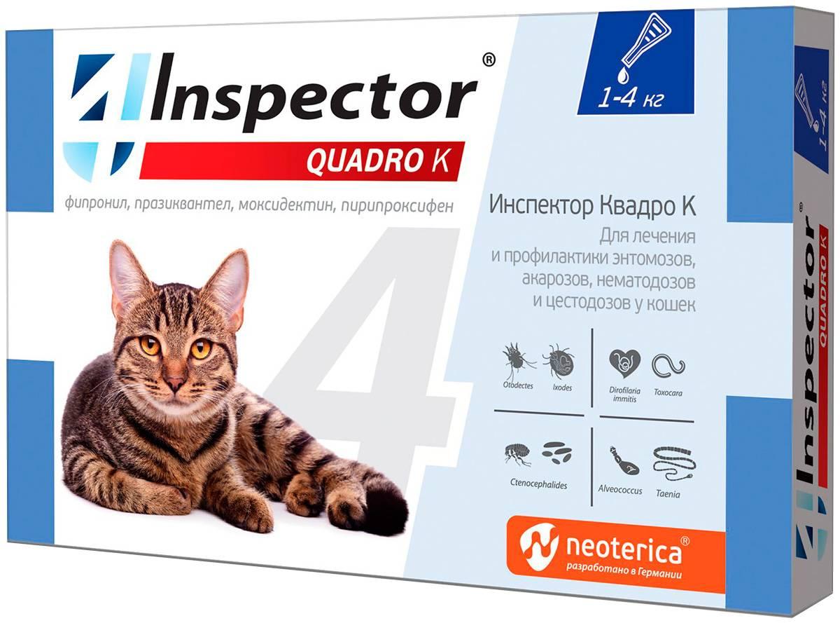 Капли инспектор для кошек: подробная инструкция по применению и отзывы