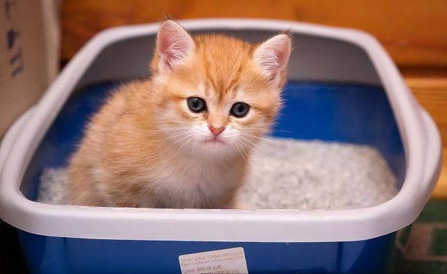 Кот орет без причины — что это может быть? | кот и кошка