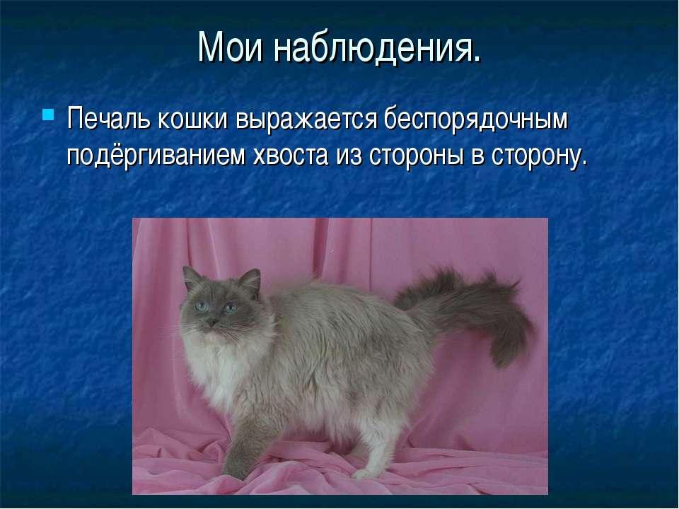 Почему кошка виляет хвостом: что означают движения