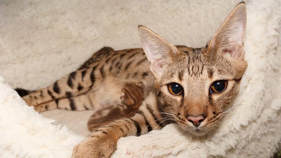 10 самых опасных животных в мире. описание и фото самых опасных животных