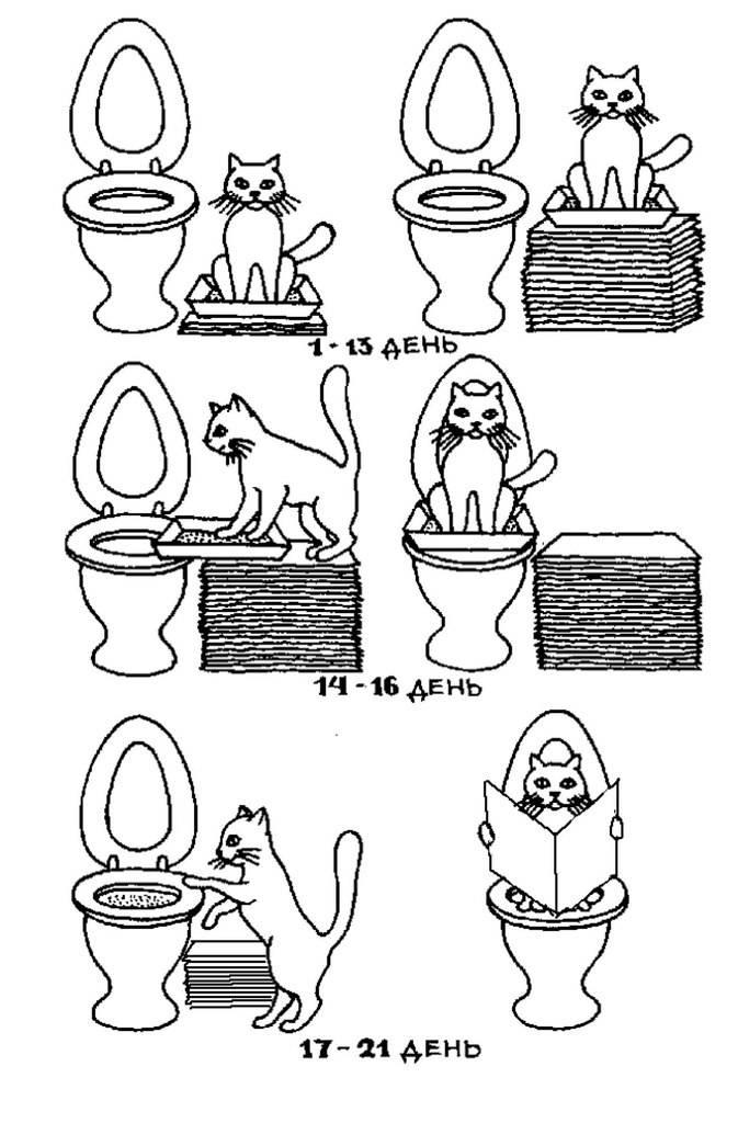 Как котенка приучить к туалету в квартире: правила обучения и советы с видео
