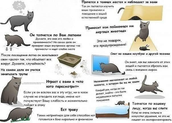 Стресс у кошек и котов причины и лечение
