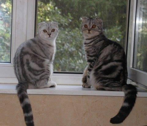 Вязка котов и кошек — всё, что нужно знать их владельцам
