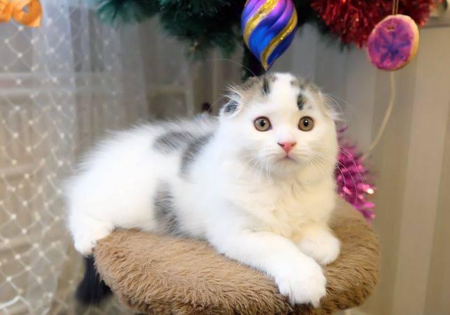 Как обманывают при продаже котят? - запись пользователя milee (milee) в сообществе домашние животные в категории помогите советом - babyblog.ru