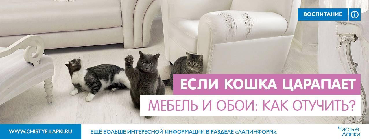 Как отучить кота драть мебель: проверенные способы от хозяев