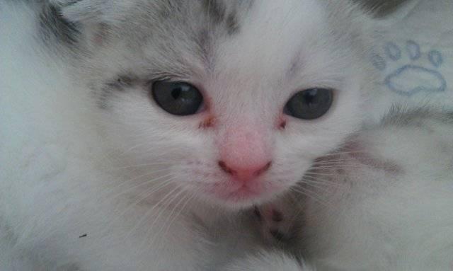 Из-за чего происходят черные выделения из глаз у кошки