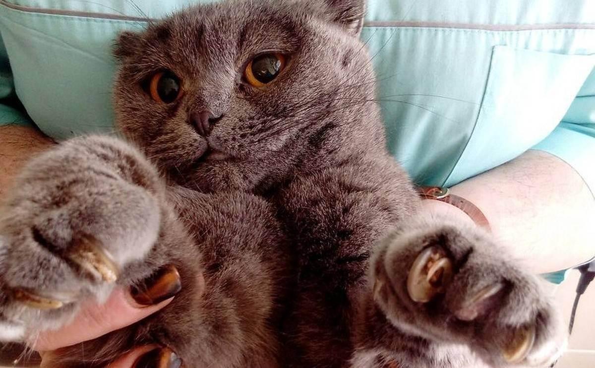 Вопрос к заводчикам кошек.