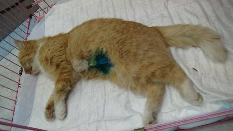 Что делать, если кот ничего не ест и его рвёт: рвёт желчью