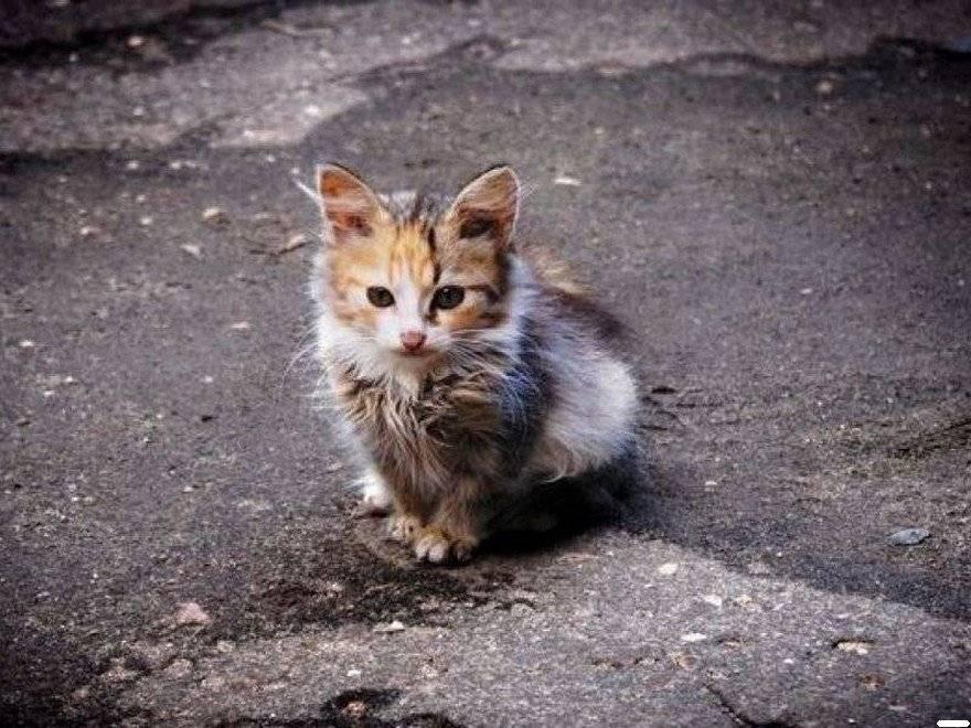 Как расположить к себе кошку, чтобы взять на руки и приручить с улицы