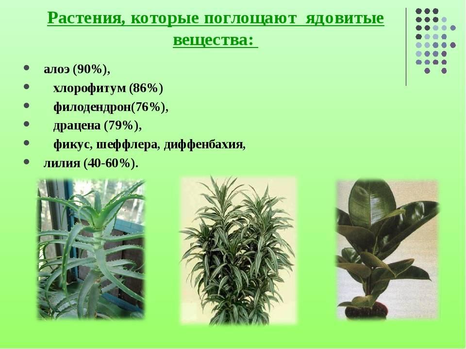 Ядовитые растения и цветы для кошек